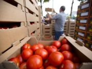 Interest in agricultural production growing in Cyprus