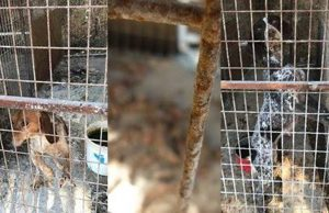 Tourists find dogs in horrendous conditions (pics)