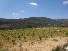 The Wine routes of Limassol