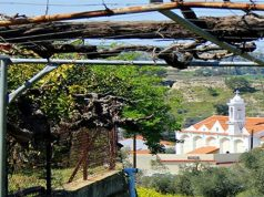The wine routes of the Cypriot capital