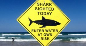 Australia shark attacks could take a bite out of tourism