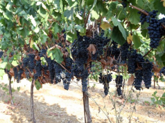 Cyprus wine competition reflects island's vibrant industry