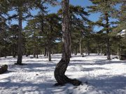 Troodos Snow