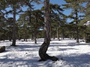Troodos snowy scenes for visitors [Video]