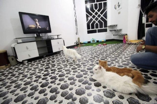 Basra's cats lap it up in their own hotel