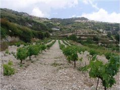 Makkas Winery awarded for bringing ancient Cypriot wine to the forefront