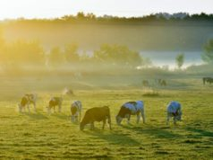 Agriculture Minister signs dairy product export protocol with China