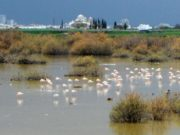Agriculture ministers of Cyprus and Greece go birdwatching at Oroklini lake