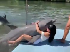 Hilarious video: Moment a dolphin gets TOO friendly with a tourist!