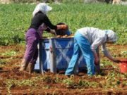 Cabinet approves fund for protection and insurance of agricultural produce