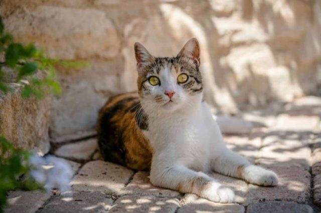 Cypriot resorts installing 'cat hotels' for strays – The Telegraph