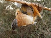EC report says Cyprus has good beaches, too many birds trapped