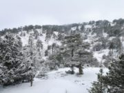 Troodos mountains covered in snow, unsettled weather continues in Cyprus (pics & video)