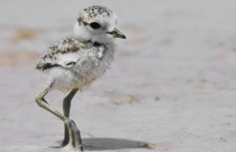Change of venue for beach concert that could have impacted protected birds