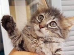 Hermes to create airport animal handling area after kitten squashed to death in conveyor belt