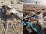 Shocking Images: Headless turtle found on Paphos beach!