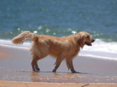 Online petition launched to make dog beaches safe