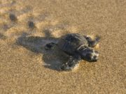 BirdLife Cyprus calls on Akamas communities to respect Lara turtle beach