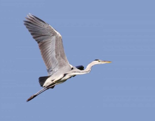 Athalassa Park to host autumn bird migration event