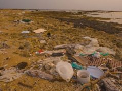 Two tonnes of rubbish, 531 of recyclables collected from beaches