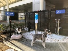Osaka airport introduces canine comfort room, complete with pole