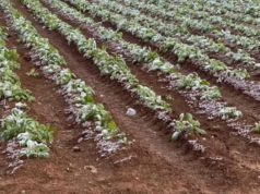 Minister assures farmers government will help over weather damage