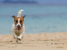 House passes bill ending banning of dogs from beaches