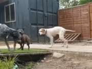 Starving dogs among those flown to UK by British Airways (video)