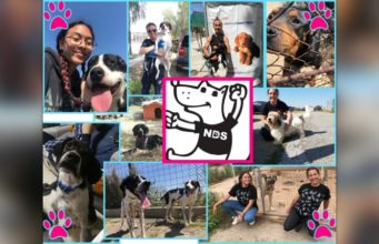 Help NDS fly dogs to their forever UK homes on Covid flight