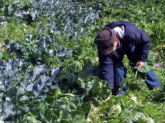 Additional subsidies for agricultural sector