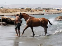 Horses can also splash around at dog beaches (VIDEO)