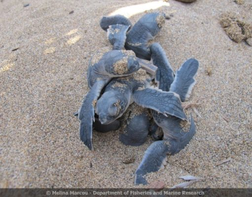 Fisheries department calls on public to take care on turtle nesting beaches