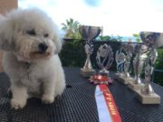 Dogs on show:Caring Canines event returns to Paphos