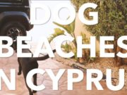 Dog Beaches in Cyprus – Larnaca and Paralimni