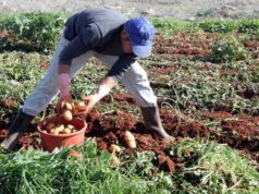 Kadis unveils new agricultural plan to attract young farmers