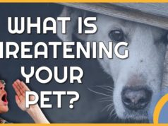 Top 10 preventable problems in pet dogs and cats
