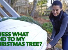 Ideas for recycling a live Christmas tree
