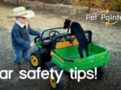Car safety pointers for travelling with pets