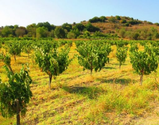 Commerce Ministry presents National Action Plan for the promotion of the Cypriot wine