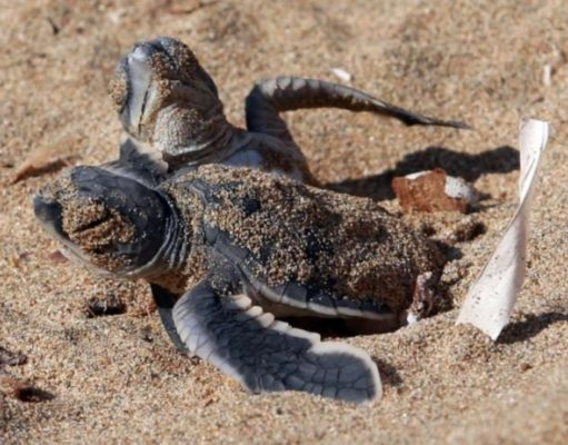 Concerns over changes to protected turtle beach in Paphos