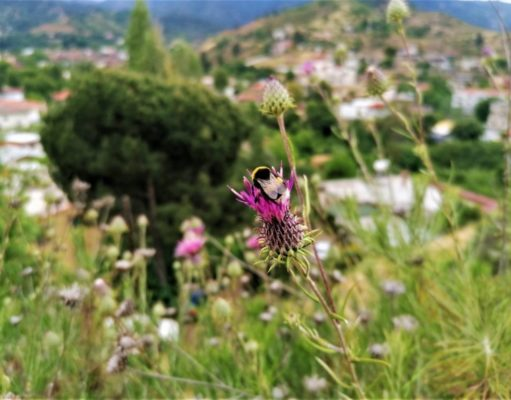 Natural trails of Cyprus. Part XXIV. Lythrodontas – Agros Cycling Route