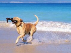 The seven beaches in Cyprus where dogs are allowed