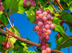 Must-visit wineries of Cyprus. Part V. Ktima Dafermou